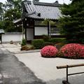 Photos: 皐月咲く大光明寺