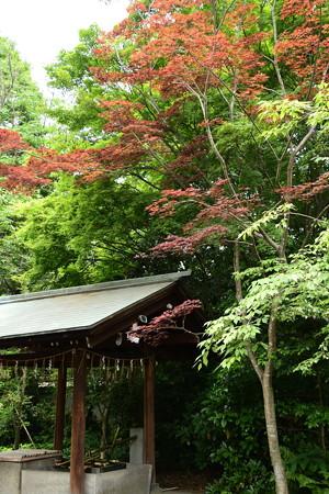 宗像神社の春もみじ