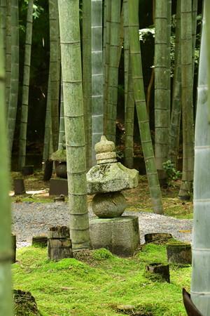 苔と竹の中に