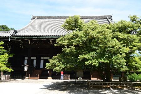 本堂前の菩提樹(ボダイジュ)