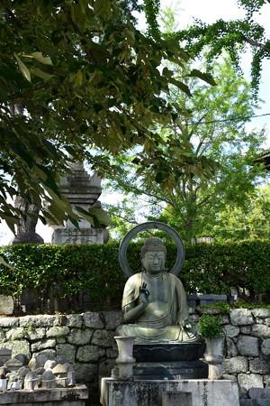 菩提樹(ボダイジュ)