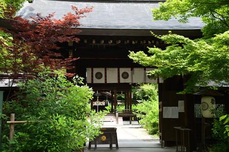 6月の梨木神社