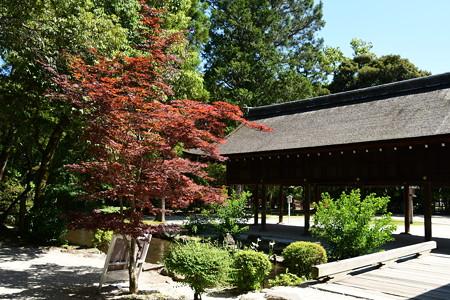 春もみじの上賀茂神社