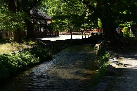 初夏の奈良の小川