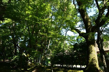 緑の渉渓園