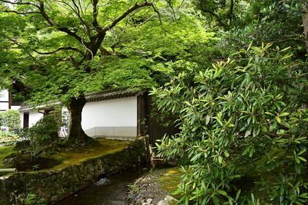 緑の南禅寺