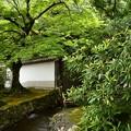 Photos: 緑の南禅寺