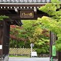 Photos: もみじの永観堂