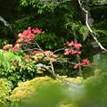 Photos: 鮮やかな赤~