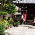 Photos: 向日葵咲く彌勒院