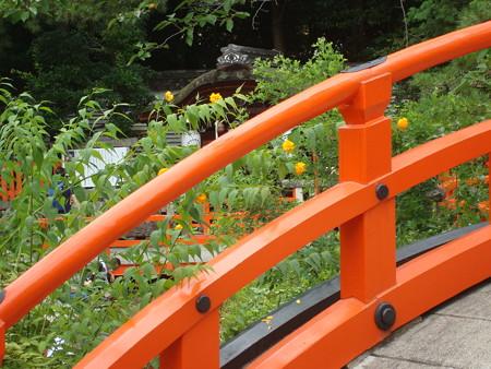 下鴨神社の山吹(ヤマブキ)