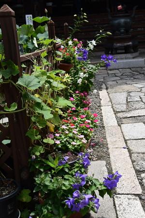 本堂前の花々