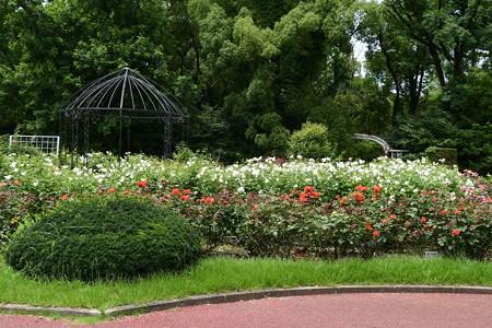 7月の薔薇園