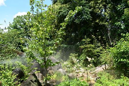 山百合の咲く風景