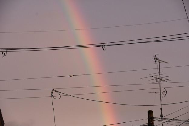 Photos: 夕方の虹