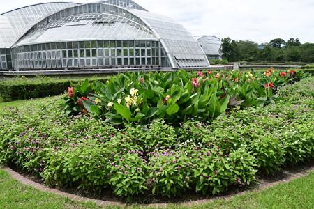 夏近づく府立植物園