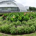 Photos: 夏近づく府立植物園