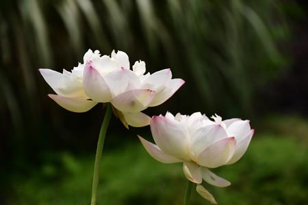 花灯初上(カトウショジョウ)