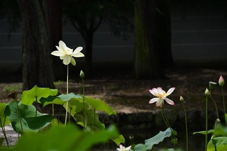 黄玉(コウギョク)・左と楚天祥雲(ソテンショウウン)