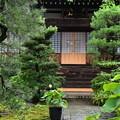 佛陀寺の蓮