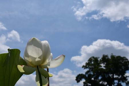 夏空に咲く