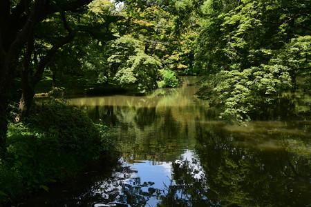 梅雨明けの池