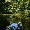 Photos: 梅雨明けの池