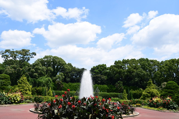 夏空の植物園