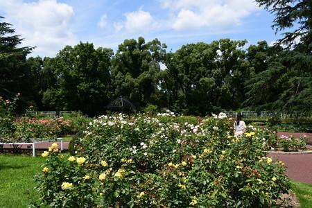 夏空の薔薇園