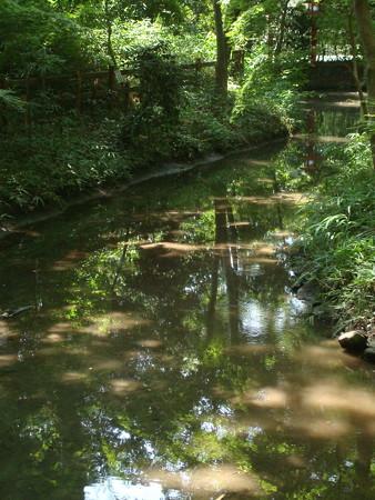 緑を映す水面