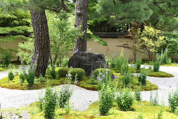 桔梗咲く源氏の庭