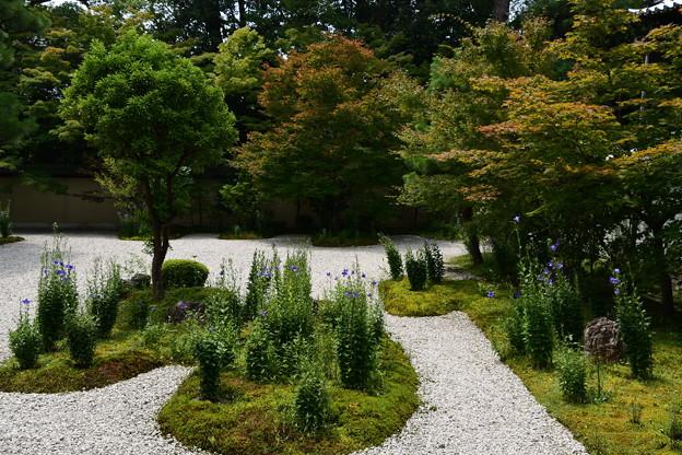 少し色づいた源氏の庭