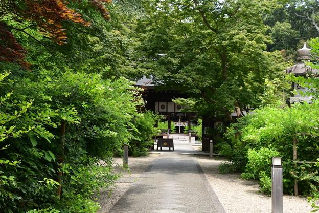 緑の梨木神社