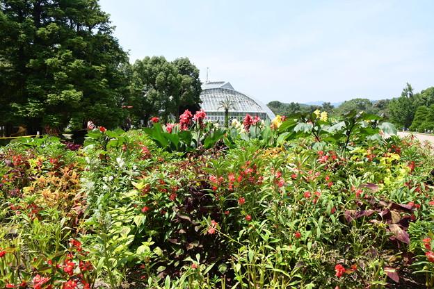 盛夏の府立植物園