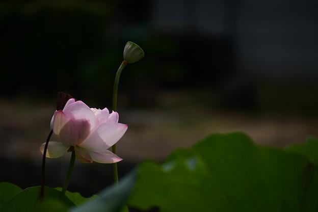 落霞映雪(ラッカエイセツ)