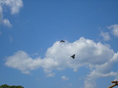 夏空に飛ぶ