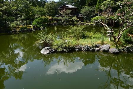 九条池の夏