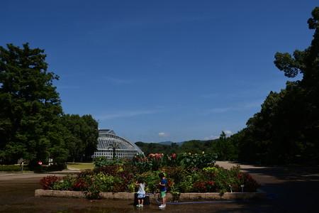 夏空の府立植物園