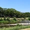 Photos: 酷暑日の賀茂川