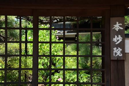 芙蓉咲く本妙院