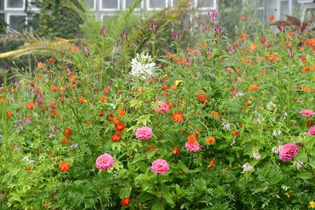 温室前のお花たち