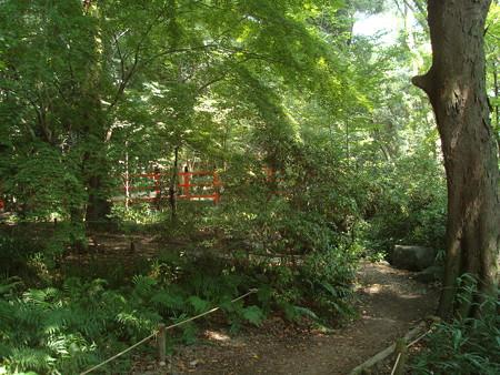 緑の糺の森