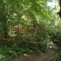 Photos: 緑の糺の森