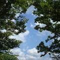 Photos: 高い空