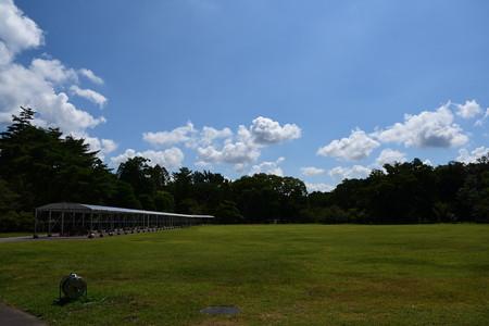 夏空が広がる中央芝生