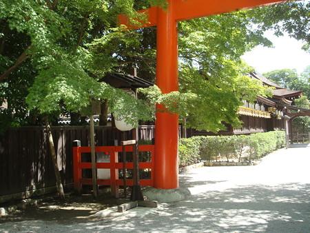 晩夏の下鴨神社