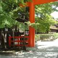 Photos: 晩夏の下鴨神社