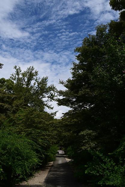 秋空の梨木神社