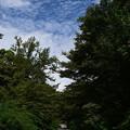 Photos: 秋空の梨木神社