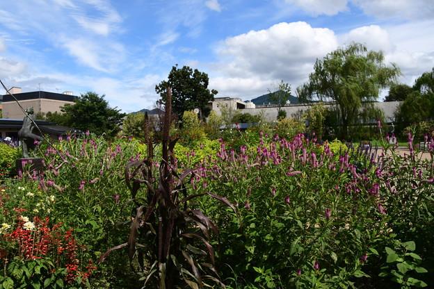 初秋の府立植物園